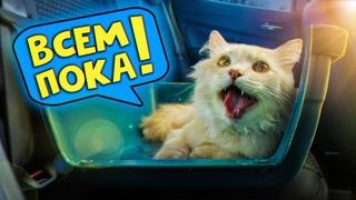 Спасение рыжего кота. Последние дни с рыжиком / SANI vlog