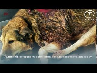 В Туле неизвестные убивают бездомных собак из огнестрельного оружия