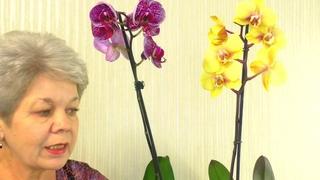 Орхидеи с ГНИЛЫМИ КОРНЯМИ ЦВЕТУТ после покупки ??? РЕАНИМАЦИЯ ? или НАРАЩИВАНИЕ Корней ?