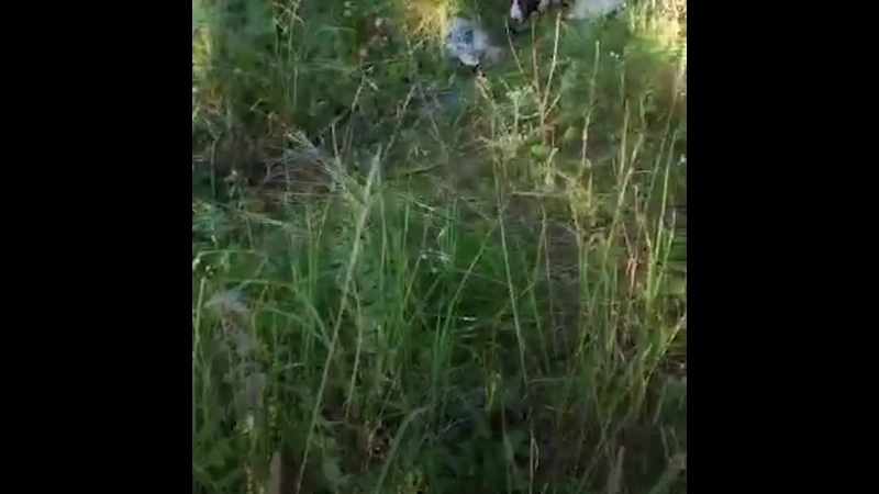 Владимирская область спасение щенка хаски с отказавшими лапами mp4
