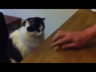 Кручу - верчу кота запутать хочу