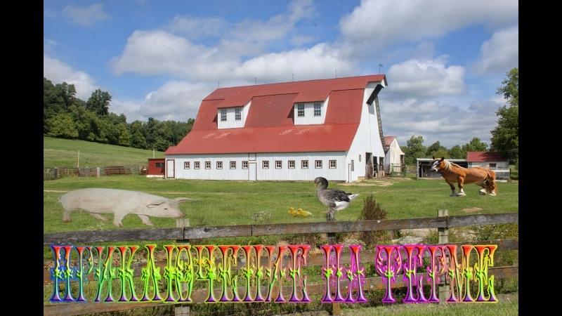 прохождение семейный остров приключения на ферме 6