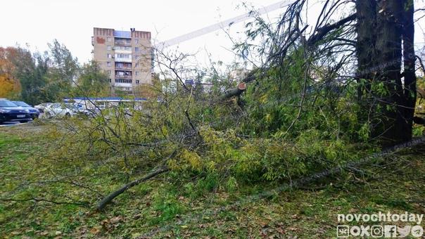 Жители Новочеркасска обеспокоены спилом нескольких...
