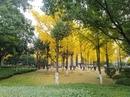 Shang Zheng   Beijing   15