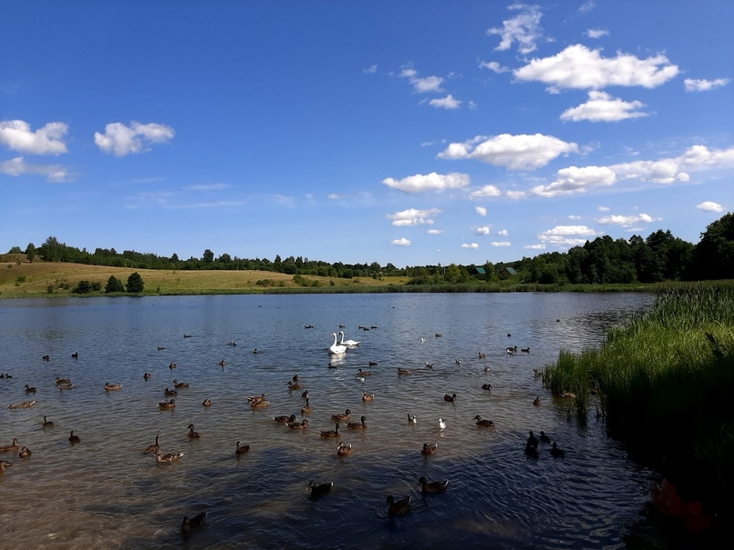 Старый Изборск. Городищенское озеро