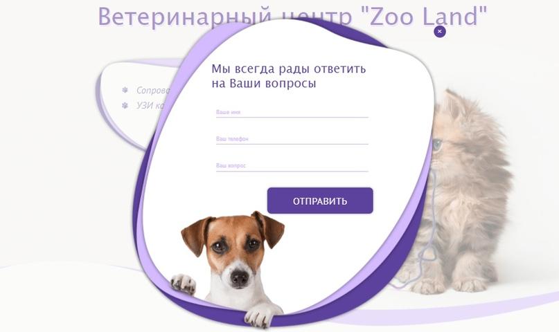 Кейс: комплексное Интернет-продвижение ветклиники ZooLand, изображение №3