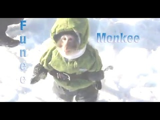 i9bonsai - funee monkee gif (Music Video)