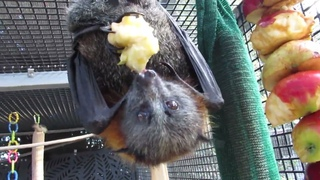 Clever Batty Feet And Naughty Photo Bombs